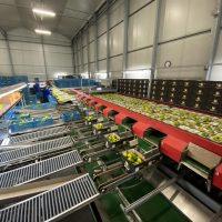 Aweta pepper sorting machine GM 6-20+1
