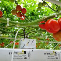 Hydroponics Assistant Grower Wanted